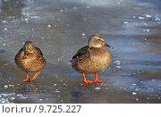 Купить «winter cold bird ice frozen», фото № 9725227, снято 21 марта 2019 г. (c) PantherMedia / Фотобанк Лори