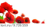 Купить «Red poppies flowers», фото № 9739559, снято 23 января 2020 г. (c) PantherMedia / Фотобанк Лори