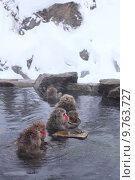 Snow monkey. Стоковое фото, фотограф Norikazu Satomi / PantherMedia / Фотобанк Лори