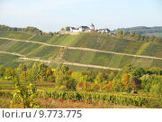 Купить «vineyard viticulture mosel marienburg nderich», фото № 9773775, снято 21 июля 2019 г. (c) PantherMedia / Фотобанк Лори