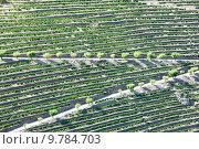 Купить «vineyars in Douro Valley, Portugal», фото № 9784703, снято 21 июля 2019 г. (c) PantherMedia / Фотобанк Лори