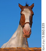 Купить «portrait eye horse organ stallion», фото № 9860839, снято 21 марта 2019 г. (c) PantherMedia / Фотобанк Лори