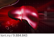 Купить «Liver», иллюстрация № 9884843 (c) PantherMedia / Фотобанк Лори