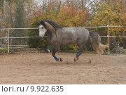 Купить «horse stallion mold gelding gallop», фото № 9922635, снято 21 марта 2019 г. (c) PantherMedia / Фотобанк Лори