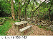 Купить «Picnic place in forest », фото № 9956443, снято 19 октября 2019 г. (c) PantherMedia / Фотобанк Лори