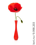 Купить «poppy in a red vase, spring or summer », фото № 9998203, снято 22 мая 2019 г. (c) PantherMedia / Фотобанк Лори