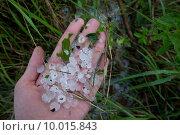 Купить «insurance damage damages detriments hailstone», фото № 10015843, снято 22 марта 2019 г. (c) PantherMedia / Фотобанк Лори
