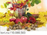 Купить «beautiful arrangement of autumn leaves and red apples and walnut», фото № 10088583, снято 21 ноября 2019 г. (c) PantherMedia / Фотобанк Лори