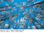 Зимний день. Стоковое фото, фотограф Фотин Андрей / Фотобанк Лори