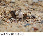 Маленькая ракушка. Стоковое фото, фотограф Тимофеева Алина / Фотобанк Лори