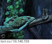 Рептилия в Океанариуме Санкт-Петербурга. Стоковое фото, фотограф Тимофеева Алина / Фотобанк Лори