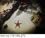 Океанариум в Санкт-Петербурге. Стоковое фото, фотограф Тимофеева Алина / Фотобанк Лори