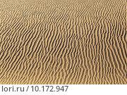 Купить « sand dune in sunrise in the desert», фото № 10172947, снято 20 июня 2019 г. (c) PantherMedia / Фотобанк Лори