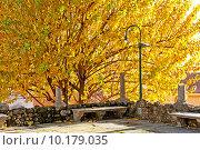 Купить «Осенняя пора в парке», фото № 10179035, снято 28 декабря 2013 г. (c) Татьяна Кахилл / Фотобанк Лори
