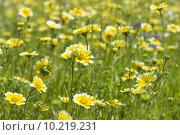 Купить «abundance of blooming wild flowers on the meadow at summertime », фото № 10219231, снято 19 февраля 2019 г. (c) PantherMedia / Фотобанк Лори