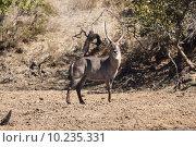 Купить «nature animal horizontal wild africa», фото № 10235331, снято 19 февраля 2019 г. (c) PantherMedia / Фотобанк Лори