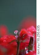 Купить «beautiful red close up water», фото № 10250635, снято 23 февраля 2019 г. (c) PantherMedia / Фотобанк Лори