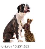 Купить «brown bower and bengal cat», фото № 10251635, снято 22 января 2019 г. (c) PantherMedia / Фотобанк Лори