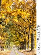 Купить «autumnal alley», фото № 10282779, снято 25 января 2020 г. (c) PantherMedia / Фотобанк Лори
