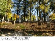 Купить «forgotten and unkempt Jewish cemetery with the strangers», фото № 10308387, снято 23 июля 2019 г. (c) PantherMedia / Фотобанк Лори