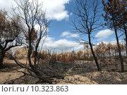 Купить «Burned forest after a huge fire in Portugal», фото № 10323863, снято 26 марта 2019 г. (c) PantherMedia / Фотобанк Лори