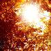 Autumnal background, фото № 10330515, снято 21 сентября 2017 г. (c) PantherMedia / Фотобанк Лори