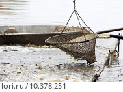 Купить «Autumn harvest of carps from fishpond to christmas markets in Czech republic. In», фото № 10378251, снято 20 апреля 2019 г. (c) PantherMedia / Фотобанк Лори