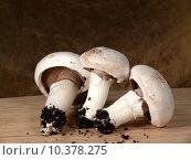 Купить «mushrooms substrate myzel pilzbrut pilzmyzel», фото № 10378275, снято 20 июля 2019 г. (c) PantherMedia / Фотобанк Лори