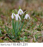 Купить «caucasian plant flower european wild», фото № 10431231, снято 19 февраля 2019 г. (c) PantherMedia / Фотобанк Лори