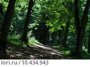 Купить «Pathway Through Woodland», фото № 10434943, снято 21 мая 2019 г. (c) PantherMedia / Фотобанк Лори