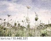 Купить «Wild Flowers And Grass», фото № 10448331, снято 19 февраля 2019 г. (c) PantherMedia / Фотобанк Лори