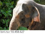 Купить «elephant», фото № 10458627, снято 24 мая 2018 г. (c) PantherMedia / Фотобанк Лори