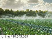 Купить «Irrigation systems in a vegetable garden», фото № 10545059, снято 23 января 2019 г. (c) PantherMedia / Фотобанк Лори