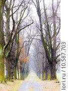 Купить «autumnal alley», фото № 10587703, снято 25 января 2020 г. (c) PantherMedia / Фотобанк Лори