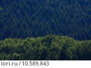 Купить «tree calendar fir calibrate calender», фото № 10589843, снято 25 марта 2019 г. (c) PantherMedia / Фотобанк Лори