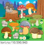 Купить «Mushroom theme image 4», иллюстрация № 10590943 (c) PantherMedia / Фотобанк Лори