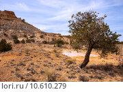 Купить «Treasures of New Mexico», фото № 10610279, снято 20 июня 2019 г. (c) PantherMedia / Фотобанк Лори