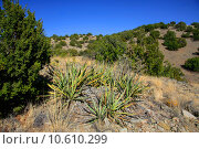 Купить «Treasures of New Mexico», фото № 10610299, снято 21 апреля 2019 г. (c) PantherMedia / Фотобанк Лори