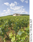 Купить «Vineyard, from Cote de Nuits. Bourgogne. Burgundy.», фото № 10662327, снято 26 апреля 2018 г. (c) PantherMedia / Фотобанк Лори
