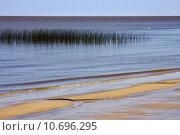 Купить «beach and grass in rio de la plata», фото № 10696295, снято 22 апреля 2018 г. (c) PantherMedia / Фотобанк Лори