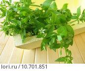 Купить «salad herbs chickweed medicinal plant», фото № 10701851, снято 25 мая 2019 г. (c) PantherMedia / Фотобанк Лори