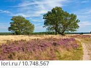 Купить «nature scenery countryside calibrate heather», фото № 10748567, снято 25 марта 2019 г. (c) PantherMedia / Фотобанк Лори