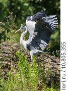 Купить «nature wildlife bird birds heron», фото № 10805355, снято 6 июля 2020 г. (c) PantherMedia / Фотобанк Лори