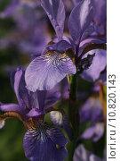Купить «plant flower flowers blossom purple», фото № 10820143, снято 19 февраля 2019 г. (c) PantherMedia / Фотобанк Лори
