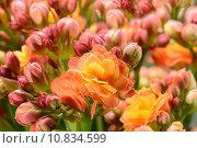 Купить «close up plant flower macro», фото № 10834599, снято 18 января 2019 г. (c) PantherMedia / Фотобанк Лори