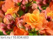 Купить «close up plant flower macro», фото № 10834603, снято 18 января 2019 г. (c) PantherMedia / Фотобанк Лори