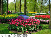 Купить «Purple, yellow, blue, pink and white tulips in Keukenhof park in Holland», фото № 10957659, снято 22 июля 2019 г. (c) PantherMedia / Фотобанк Лори