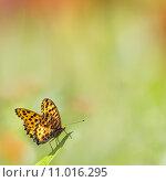 Купить «Butterflies flying», фото № 11016295, снято 14 ноября 2018 г. (c) PantherMedia / Фотобанк Лори