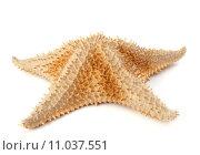 Купить «thorny starfish in front of white background», фото № 11037551, снято 17 февраля 2019 г. (c) PantherMedia / Фотобанк Лори