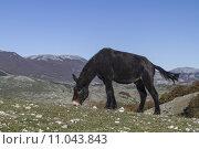 Купить «mountain italy mountains donkey mule», фото № 11043843, снято 16 июля 2019 г. (c) PantherMedia / Фотобанк Лори